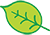handrawn green leaf